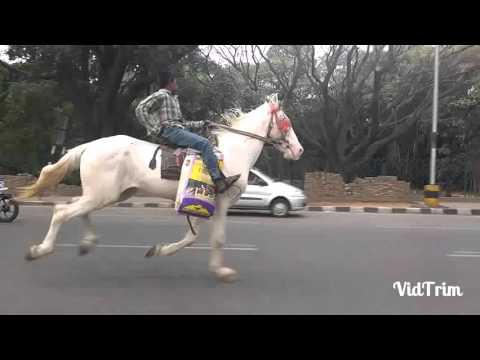 Must watch-Bangalore boy riding horse