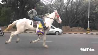 Must watch-Bangalore boy riding horse thumbnail