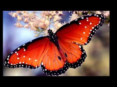 Bora Ayanoğlu - Kelebekler Özgürdür mp3 indir