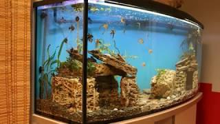 aquarium fish// аквариум своими руками//кормление//аквариумные растения//fish tank ❤️❤️❤️
