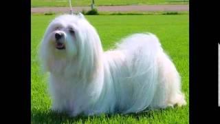 корм для собак екатеринбург купить(, 2014-10-20T16:24:03.000Z)
