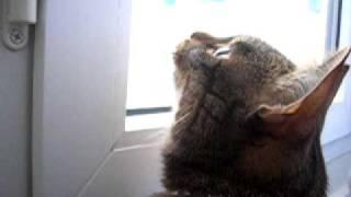 Le chat qui parlait bizarrement aux oiseaux...