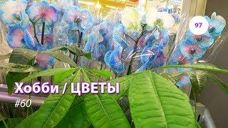 97#60 / Хобби-Цветы / 13.09.2018 - CASTORAMA + ГИПЕРМАРКЕТ ГЛОБУС (Г. ЩЕЛКОВО)