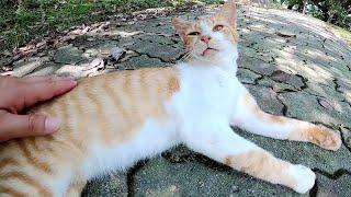 上機嫌でモフられる茶シロ猫、帰ろうとすると足にスリスリしてきた
