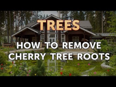 How To Remove Cherry Tree Roots Youtube