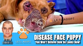 Hope Rescues Disease Face Puppy  @Viktor Larkhill Extreme Rescue