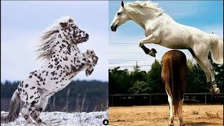 Cute And funny horse Videos Compilation cute moment of the horses Soo Cute! #9