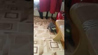 Кот и валерьянка ))))))) ржака