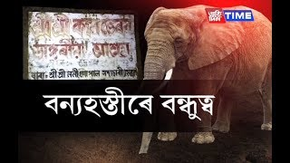 Unique friendship tale between Elephants and Priest in Hojai