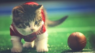 KITTENS PLAY MINI FOOTBALL // ScottDW