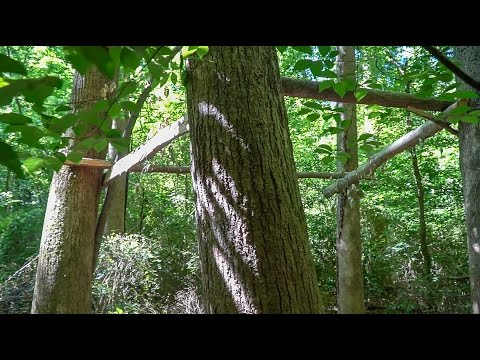 Building a Tree House w/ Hand-Cut Green Lumber - part 1