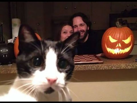 Funniest Cat Photobombs EVER FUNNY CATS Photobombs Need To Be - 20 hilarious cat photobombs
