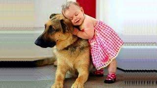 「아기와 개」무슨 짓을해도 화 내지 셰퍼드 강아지 너무 친절!
