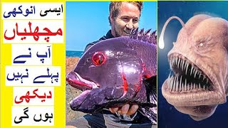Anokhi Machlian - These Unique FISH will Amaze you