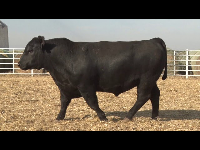 Express Ranches Lot 281