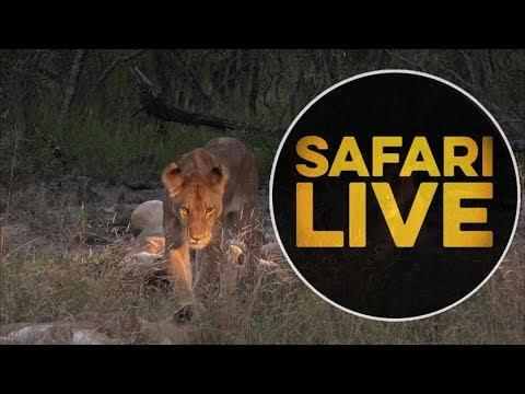 safariLIVE - Sunset Safari - May, 17. 2018