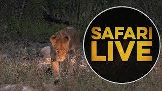 safariLIVE - Sunset Safari - May, 17. 2018 thumbnail