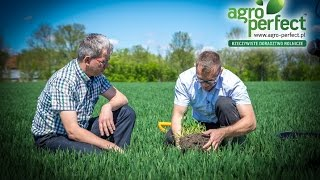 AGRO-PERFECT Bydgoszcz Arkadiusz Janus pszenica