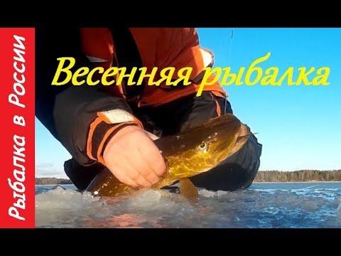 Ловля окуня на блесну . Весенняя рыбалка со льда + Подводная съемка .