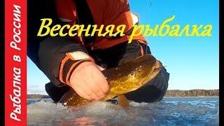 Рыбалка весной + Подводная съемка .  Ловля окуня на блесну .