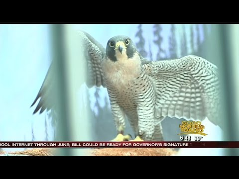 Idaho Gems: World Center for Birds of Prey