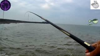 釣魚趣 第3支水箭波堤乾潮底南極蝦餌