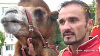 """Камили се разходиха по площад """"Свобода"""" в Търговище"""