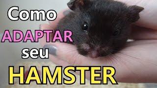 Adaptação de um hamster