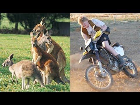 how-to-catch-a-kangaroo