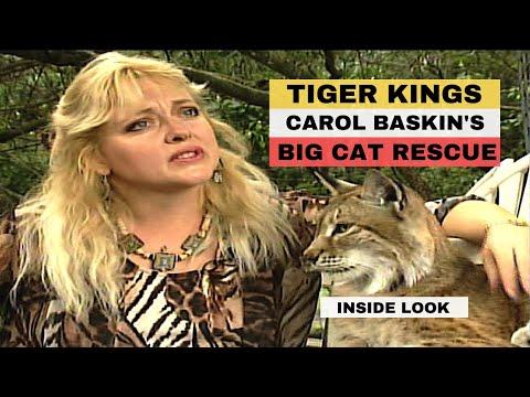Inside Big Cat Rescue Florida Tiger King - Carole Baskin's Sanctuary