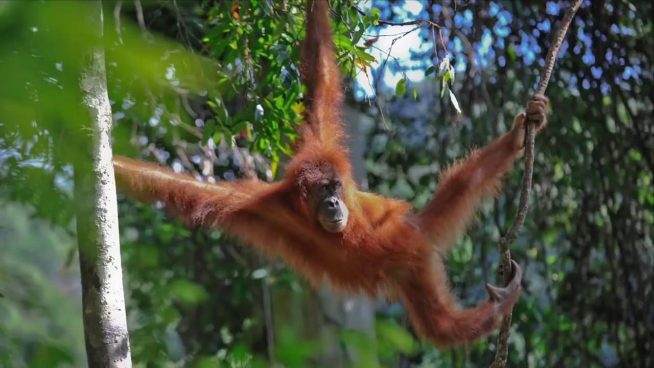 La selva youtube - Mas goy fornells de la selva ...