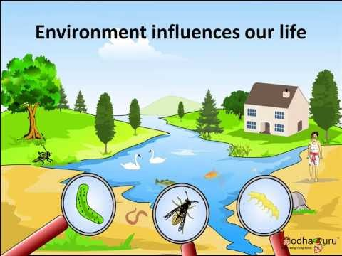 Science - What  are  Biotic and Abiotic Components of the En