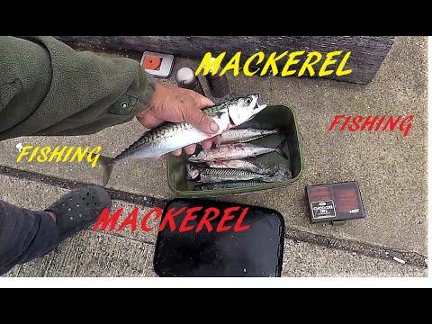 Mackerel Fishing West Bay Dorset