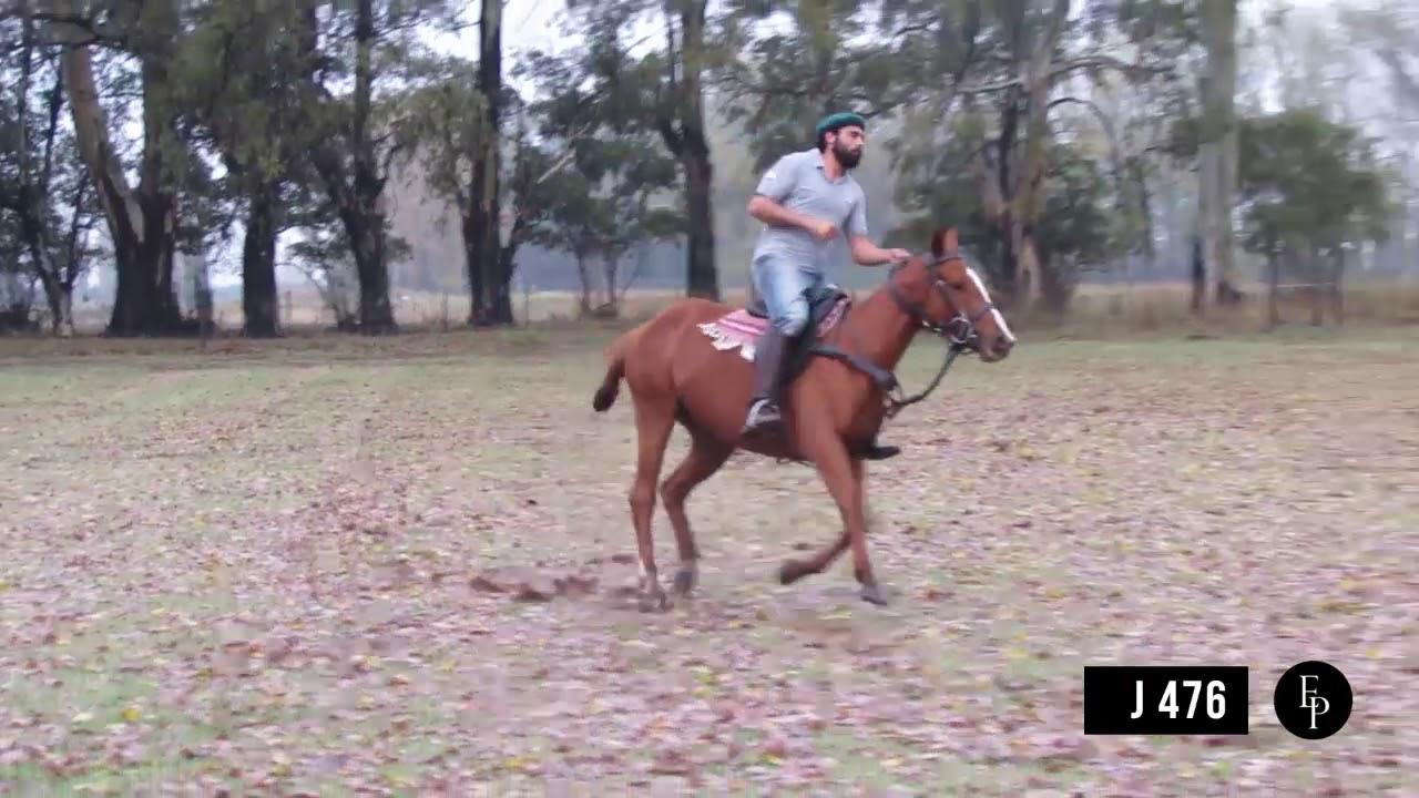 Polo Argentino - Doma + primeras taqueadas   El potrero Centro de Doma