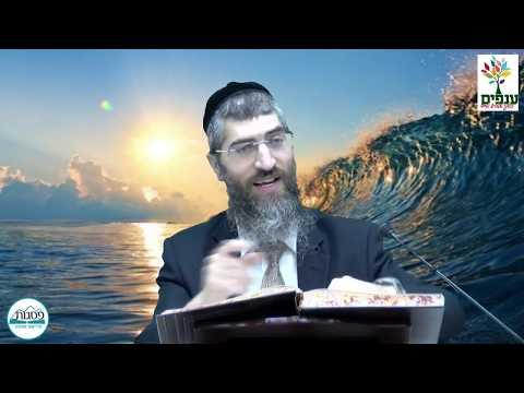 הלכות בן המצרים ותשעת הימים - הרב יצחק יוסף (הנכד)  HD - שידור חי