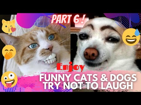 🤣 It's TIME for SUPER LAUGH! 🤣FUNNY CATS & DOGS🙀🐶BEST FUNNY MOMENTS PART 6 🤪 | TRY NOT TO LAUGH 🤭