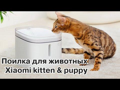 Забота о животных с новой поилкой Xiaomi Kitten & Puppy