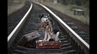 Реакция собаки на поезд | российские железные дороги