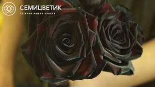 Обзор букета: 51 черная роза, Россия