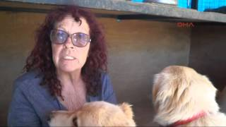 Marmaris sokaklarındaki cins köpekler İngiltere yolcusu