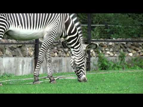 Видео Презентация дикие животные красивые