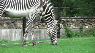 Дикие животные для детей. Развивающая презентация (видео нарезки)