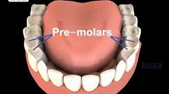 Teeth Structure for kids in science body parts - 3D