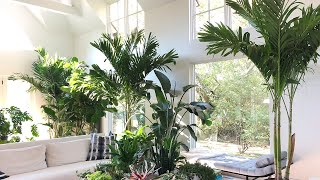 Houseplant Tour & Indoor Plant Care Tips