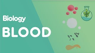 What is Blood? | Biology for All | FuseSchool
