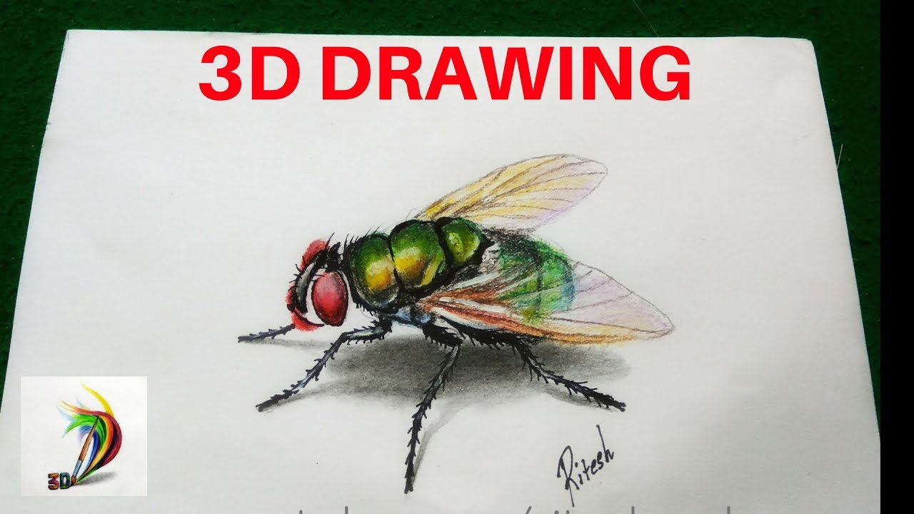 Uncategorized How To Draw Flies how to draw 3d fly on paper hyper realistic drawing of pencil colour flies