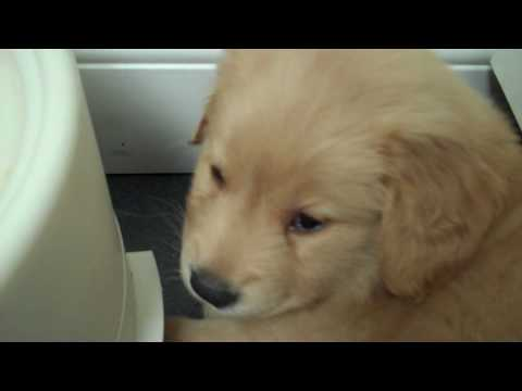 Oh My God, This Tiny Puppy Has The Hiccups
