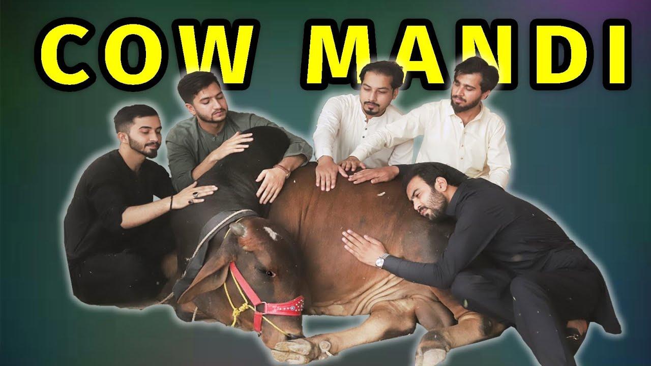 Download Cow mandi 2021 l Peshori vines