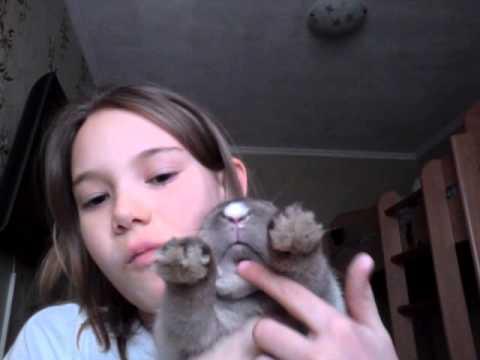 Мой кролик Крош!!!!