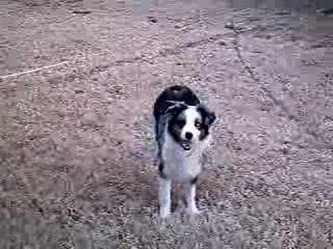 Doggies Run around
